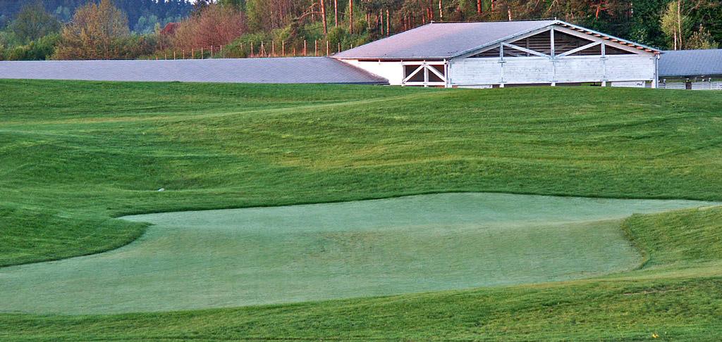 Budowa greenu golfowego: 5. Obsiany, gotowy putting green wraz z green approaches w fazie wzrostu traw (wykształcanie się darni).