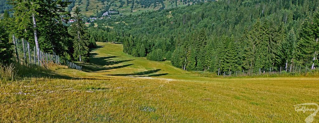 Budowa stoku narciarskiego - trasa zjazdowa po rekultywacji gruntu. Darń na stoku narciarskim jako zabezpieczenie antyerozyjne.