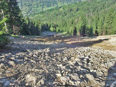 Budowa stoku narciarskiego - usunięte karpy na wyrębie, frezowanie gruntu i kamieni kruszarką (gruntofrez), niwelacja terenu.