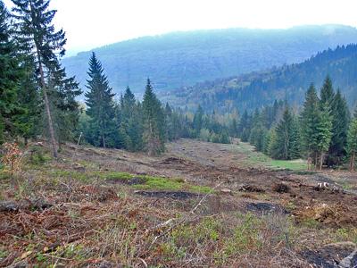Budowa stoku narciarskiego - wycinka, karczowanie drzew na trasie zjazdowej, karczowanie podszytu, prace ziemne.